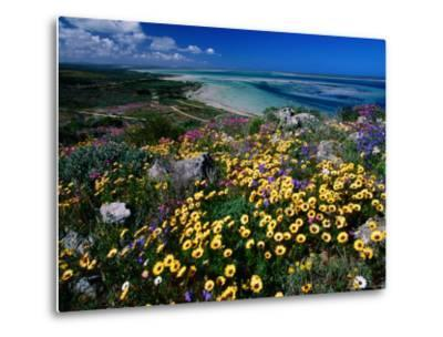 Overhead of Beach and Wildflowers-Frans Lemmens-Metal Print