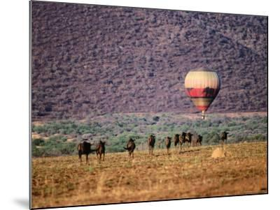 Wildebeests and Hot-Air Balloon-Frans Lemmens-Mounted Photographic Print
