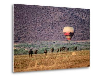 Wildebeests and Hot-Air Balloon-Frans Lemmens-Metal Print