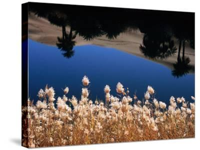 Palm Trees Reflected in the Oasis Water, Sahara Desert-Frans Lemmens-Stretched Canvas Print