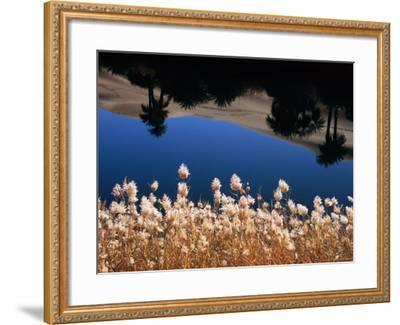 Palm Trees Reflected in the Oasis Water, Sahara Desert-Frans Lemmens-Framed Photographic Print