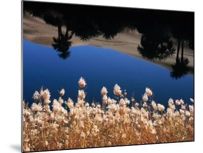 Palm Trees Reflected in the Oasis Water, Sahara Desert-Frans Lemmens-Mounted Photographic Print