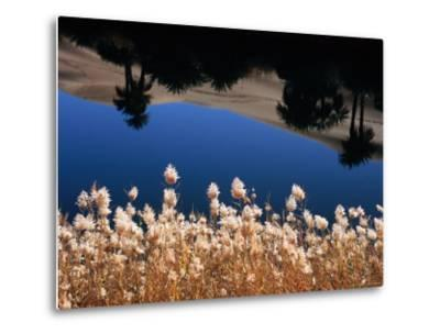 Palm Trees Reflected in the Oasis Water, Sahara Desert-Frans Lemmens-Metal Print