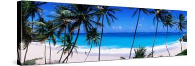 Coconut Trees Along Bottom Bay-Holger Leue-Stretched Canvas Print