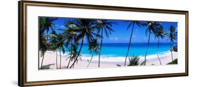 Coconut Trees Along Bottom Bay-Holger Leue-Framed Photographic Print
