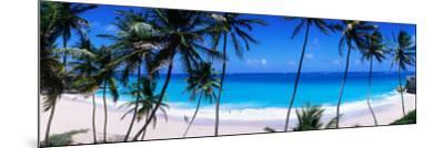Coconut Trees Along Bottom Bay-Holger Leue-Mounted Photographic Print