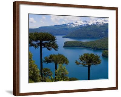 Araucaria Trees Above Lago Conguillio-Bethune Carmichael-Framed Photographic Print