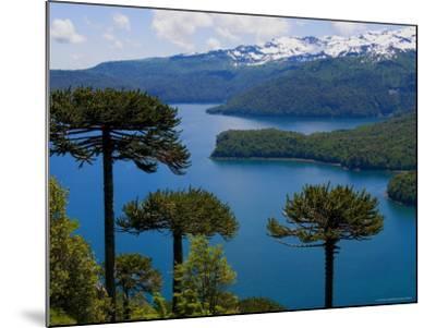 Araucaria Trees Above Lago Conguillio-Bethune Carmichael-Mounted Photographic Print
