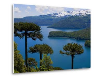 Araucaria Trees Above Lago Conguillio-Bethune Carmichael-Metal Print
