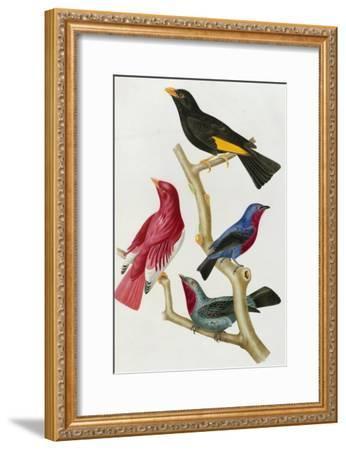 Chatterer Birds, c.1852-1856-Jean-Theodore Descourtilz-Framed Giclee Print