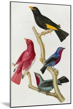 Chatterer Birds, c.1852-1856-Jean-Theodore Descourtilz-Mounted Giclee Print