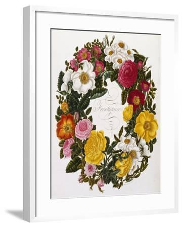 Frontispiece of Roses, Collection of Roses from Nature-Mary Lawrence-Framed Giclee Print
