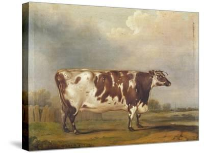 Wildair' an Eight-Year-Old Heifer in a River Landscape, 1827-Thomas Weaver-Stretched Canvas Print