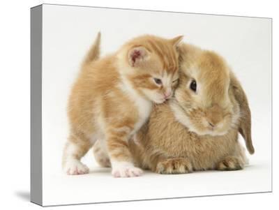 Domestic Kitten (Felis Catus) Next to Bunny, Domestic Rabbit Photographic  Print by Jane Burton | Art com