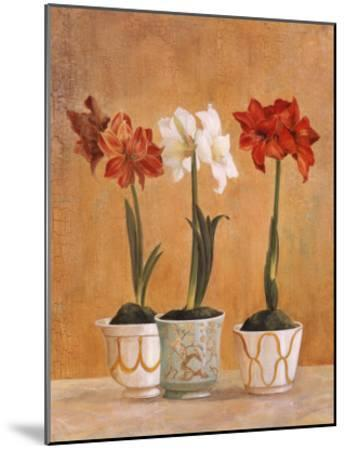 Amaryllis in Pots-Hampton Hall-Mounted Premium Giclee Print