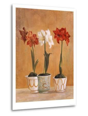 Amaryllis in Pots-Hampton Hall-Metal Print