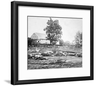 Dead Horses on the Battlefield, Civil War-Lantern Press-Framed Art Print