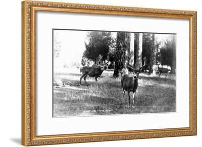 View of Four Deer in the Woods-Lantern Press-Framed Art Print