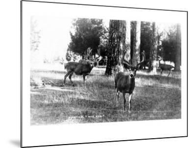View of Four Deer in the Woods-Lantern Press-Mounted Art Print