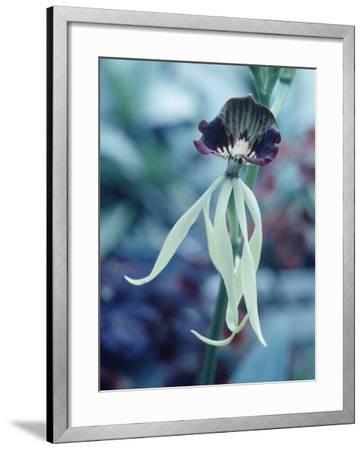 Orchids-Alfred Eisenstaedt-Framed Photographic Print