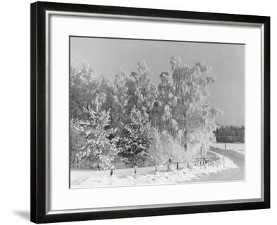 Snow Covering Countryside Northeast of Lake Ladoga-Carl Mydans-Framed Photographic Print