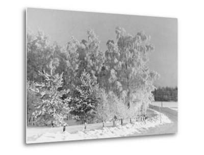Snow Covering Countryside Northeast of Lake Ladoga-Carl Mydans-Metal Print