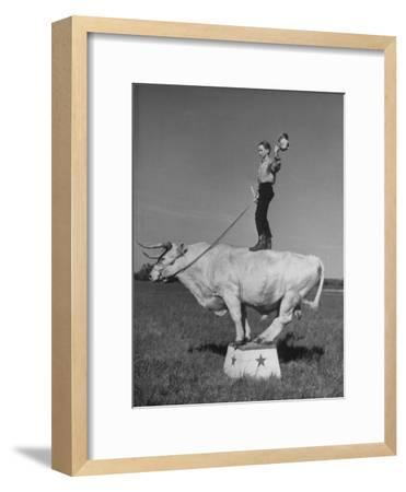 Boy Standing on Shorthorn Bull at White Horse Ranch-William C^ Shrout-Framed Photographic Print