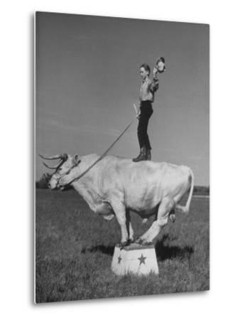 Boy Standing on Shorthorn Bull at White Horse Ranch-William C^ Shrout-Metal Print