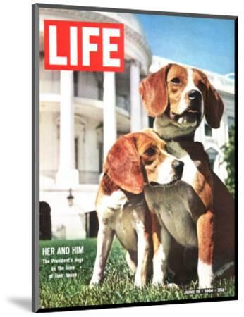 President Johnson's Beagles, June 19, 1964-Francis Miller-Mounted Photographic Print