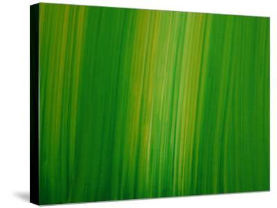 Striated Green Background--Stretched Canvas Print