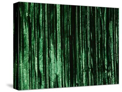 Green and Black Brush Strokes--Stretched Canvas Print