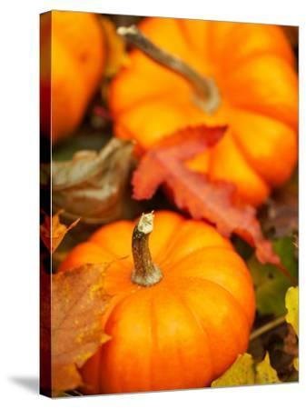 Traditional Autumnal Scene of Small Pumpkins and Fall Leaves--Stretched Canvas Print