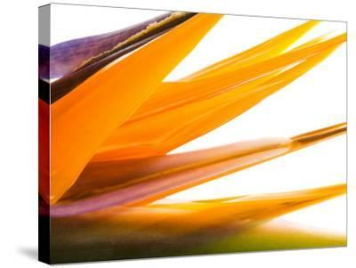 Close-Up of Beautiful Blooming Flower--Stretched Canvas Print