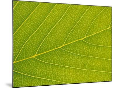 Veins of Leaf-Jon Arnold-Mounted Photographic Print