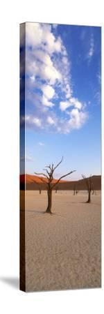 Sossusvlei, Namib-Naukluft Park, Namibia, Africa-Gavin Hellier-Stretched Canvas Print