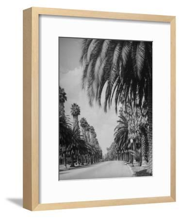 Palm Tree-Lined Street in Beverly Hills-Alfred Eisenstaedt-Framed Photographic Print