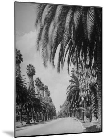 Palm Tree-Lined Street in Beverly Hills-Alfred Eisenstaedt-Mounted Photographic Print