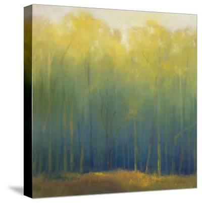 Deep Woods in Summer-Teri Jonas-Stretched Canvas Print