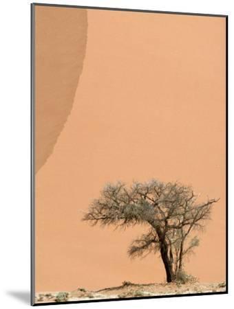 Acacia Tree Dwarfed by an Immense Sand Dune at Sunset-Jason Edwards-Mounted Photographic Print