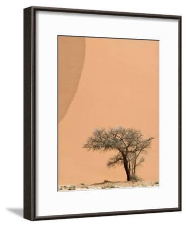 Acacia Tree Dwarfed by an Immense Sand Dune at Sunset-Jason Edwards-Framed Photographic Print