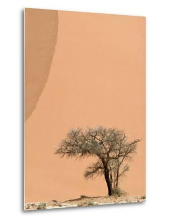 Acacia Tree Dwarfed by an Immense Sand Dune at Sunset-Jason Edwards-Metal Print