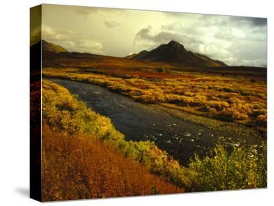 River Flows Through a Field in Autumn Color, Tombstone Territorial Park, Yukon Territory, Canada-Nick Norman-Stretched Canvas Print