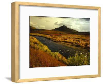 River Flows Through a Field in Autumn Color, Tombstone Territorial Park, Yukon Territory, Canada-Nick Norman-Framed Photographic Print