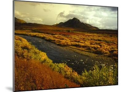 River Flows Through a Field in Autumn Color, Tombstone Territorial Park, Yukon Territory, Canada-Nick Norman-Mounted Photographic Print