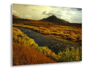 River Flows Through a Field in Autumn Color, Tombstone Territorial Park, Yukon Territory, Canada-Nick Norman-Metal Print