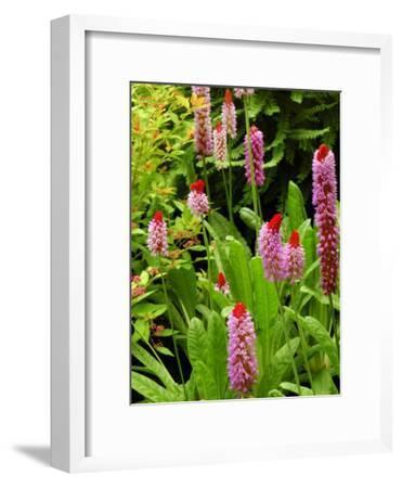 Flowers in Garden, Victoria, British Columbia, Canada-Darlyne A^ Murawski-Framed Photographic Print