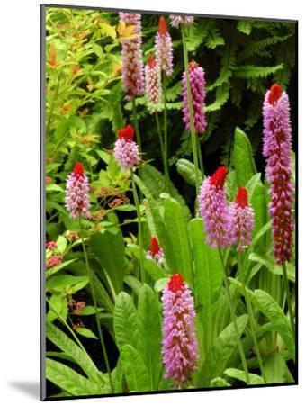 Flowers in Garden, Victoria, British Columbia, Canada-Darlyne A^ Murawski-Mounted Photographic Print