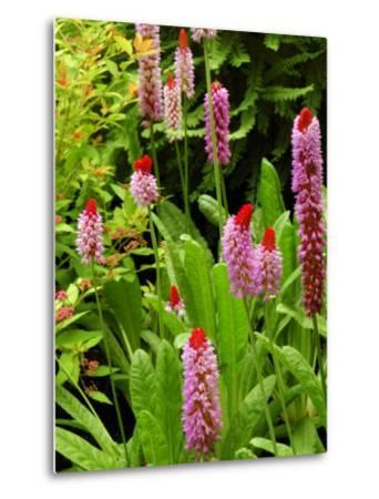Flowers in Garden, Victoria, British Columbia, Canada-Darlyne A^ Murawski-Metal Print