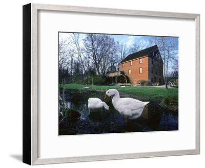 Geese Wading in Front of Colvin Run Mill, Colvin Run Mill, Great Falls, Virginia-Annie Griffiths Belt-Framed Photographic Print