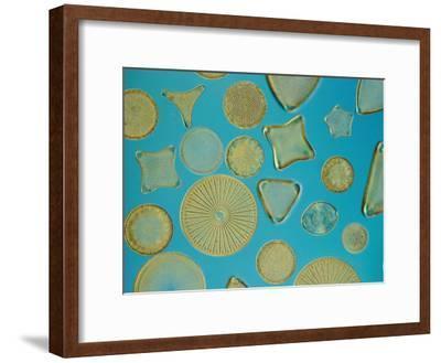 Close View of Diatoms, USA-Darlyne A^ Murawski-Framed Photographic Print